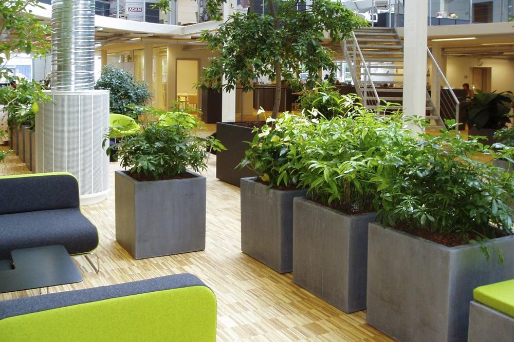 grønne planter, arbejdsmiljø,