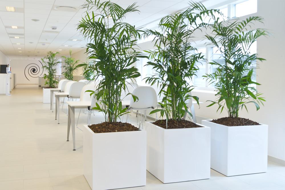 Hvide krukker med grønne planter,
