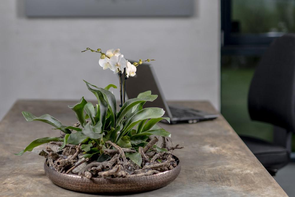 Kobber fad med orkide og pynt.