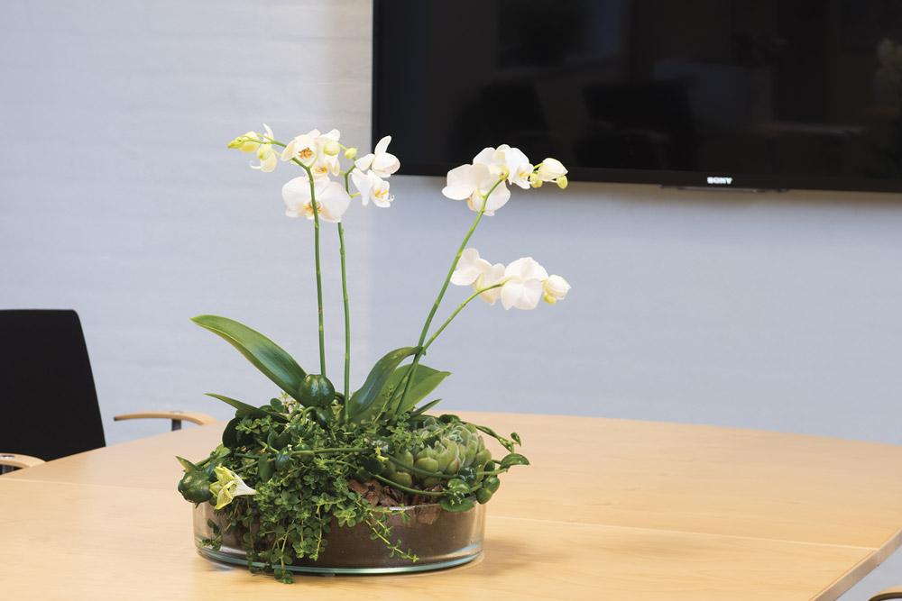glasfad med hvide phalaenopsis,