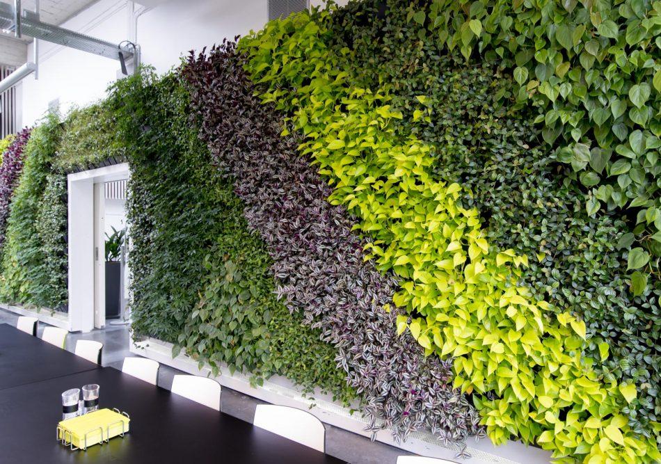 Stor plantevæg, plantevægge