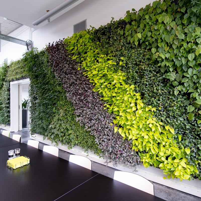 Mobil plantevæg til afskærmning på kontoret