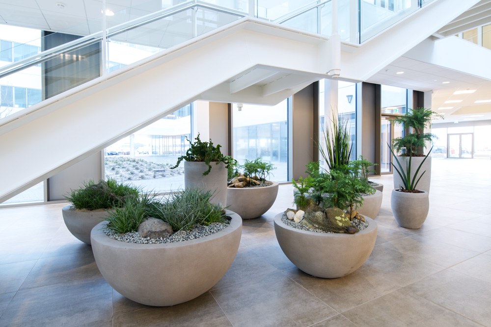 plant care, plant service, in Denmark