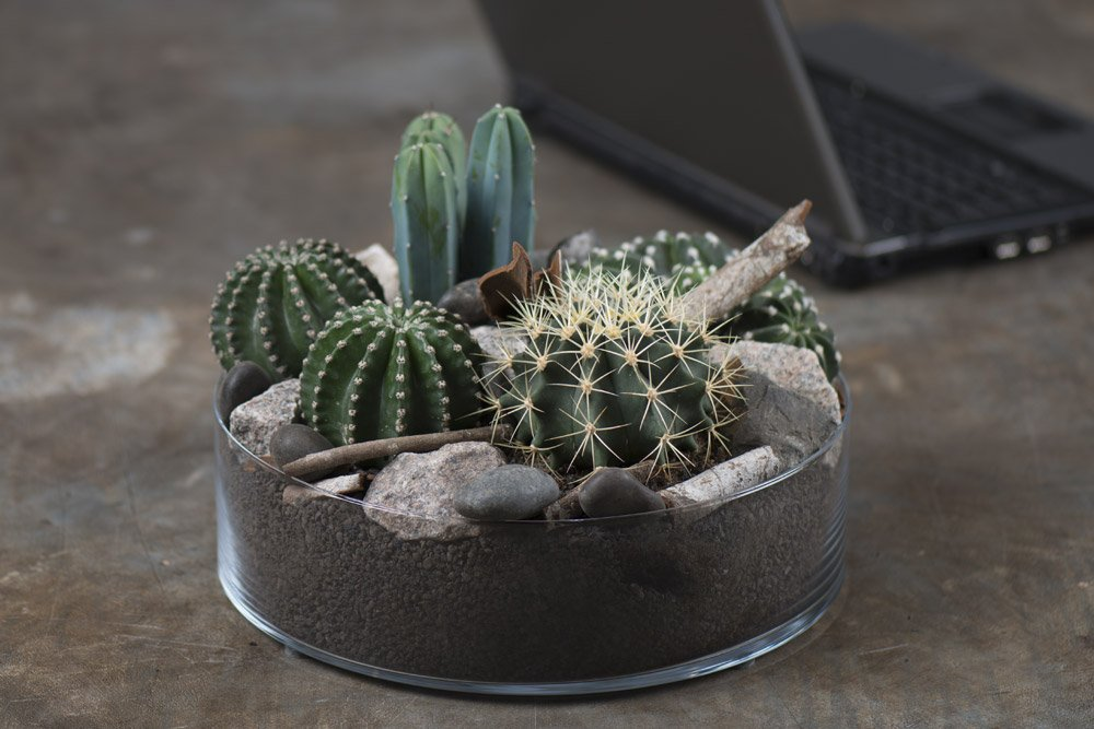 kaktus dekoration,