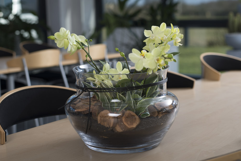 stor orkide dekoration,