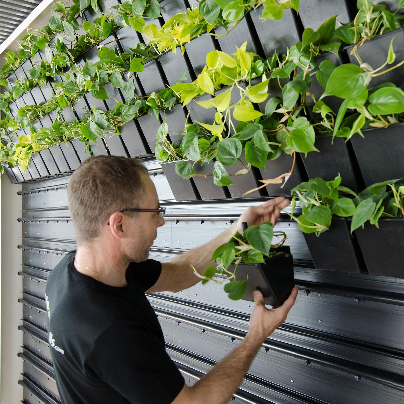montering af plantevæg,
