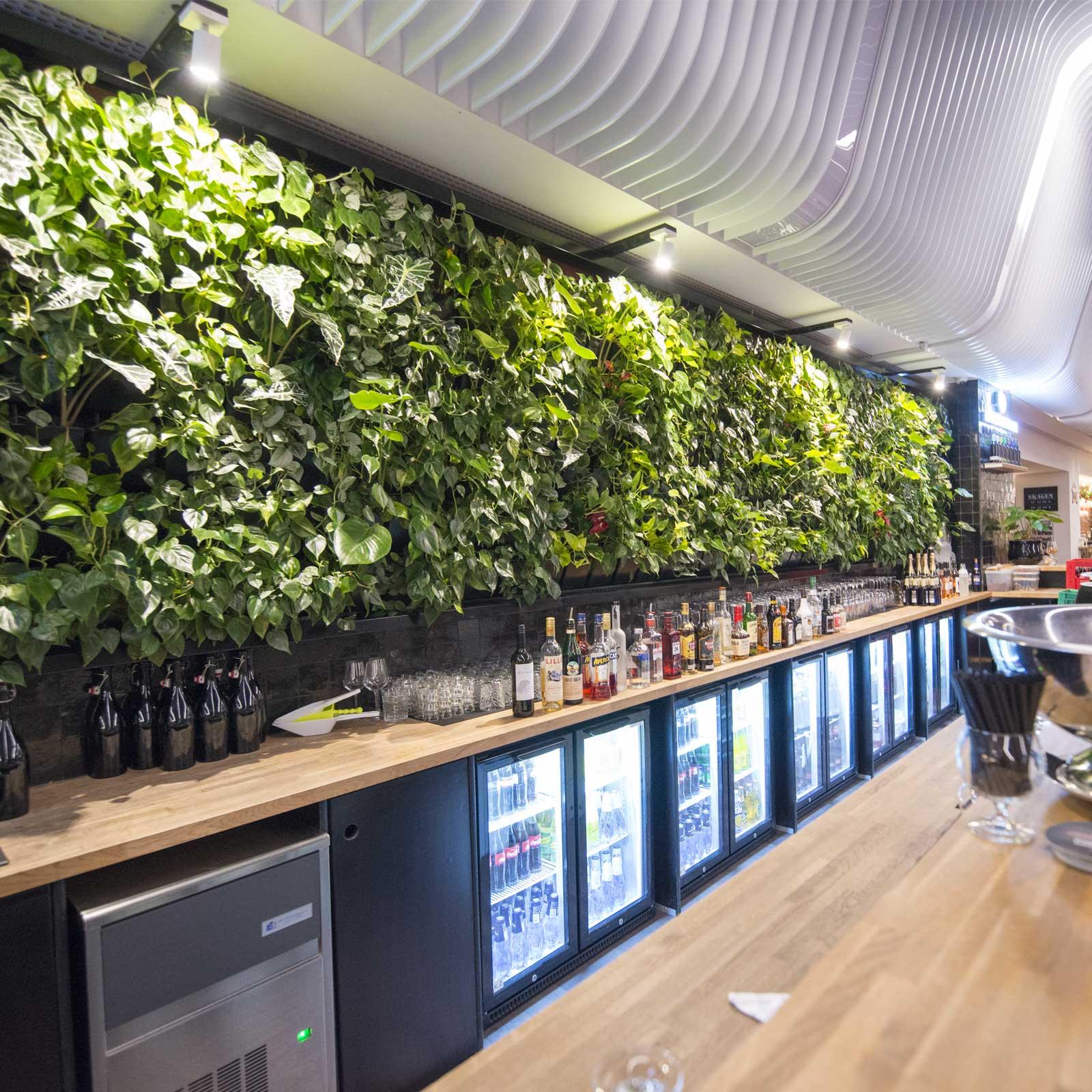 Plantevæg i bar, plantevægge, plantevæg pris