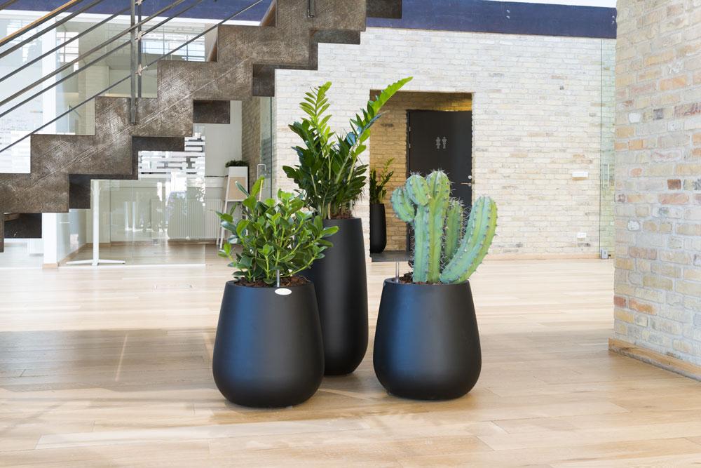 planteservice Odense, plante gruppe, grønne planter, sukkulent, kaktus,