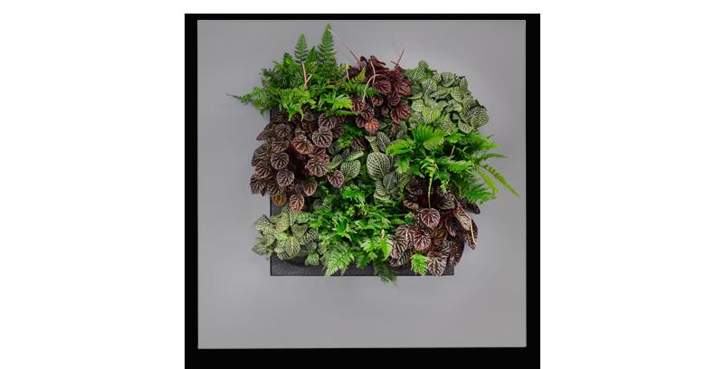 Livepicture plantevæg,