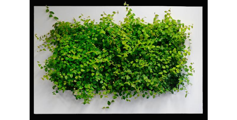 plantevæg live picture,