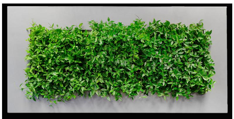 lille plantevæg,