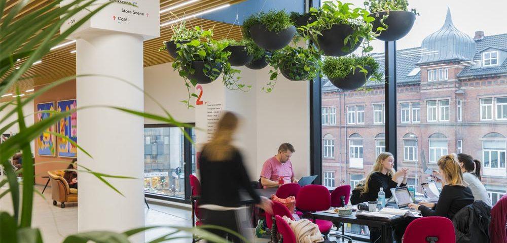 plantemiljø, grønne planter,