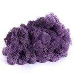 Purple Mos