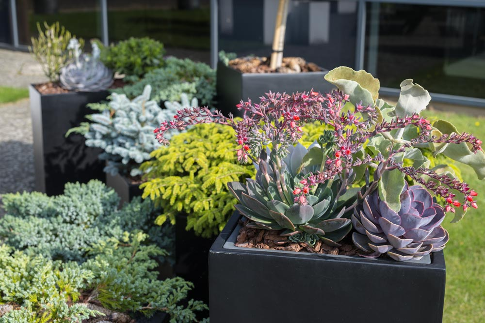 planter til udekrukker, sæsontrends, sukkulenter