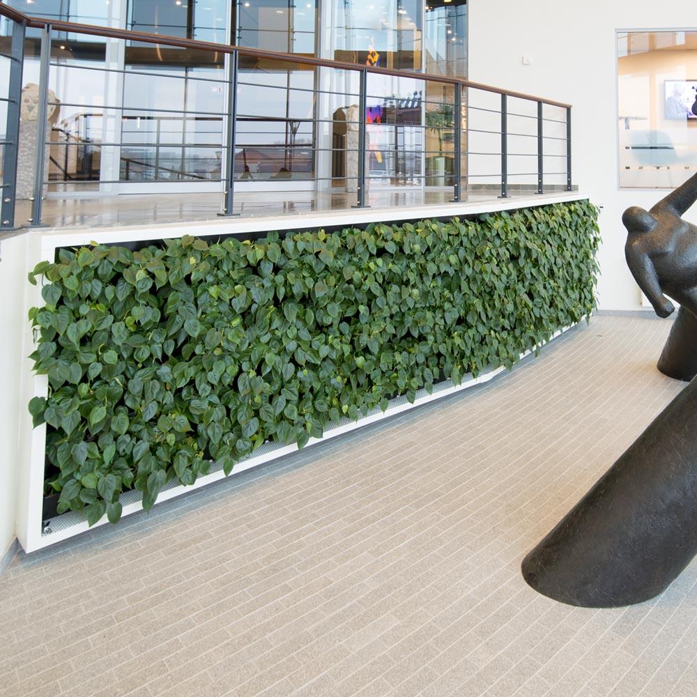 Grøn væg, indgang,