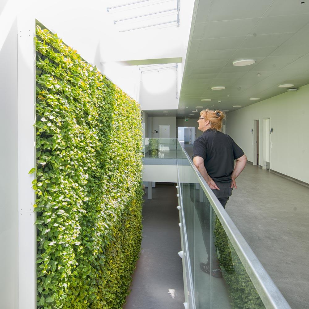 Plantevæg sygehus, grønvæg,
