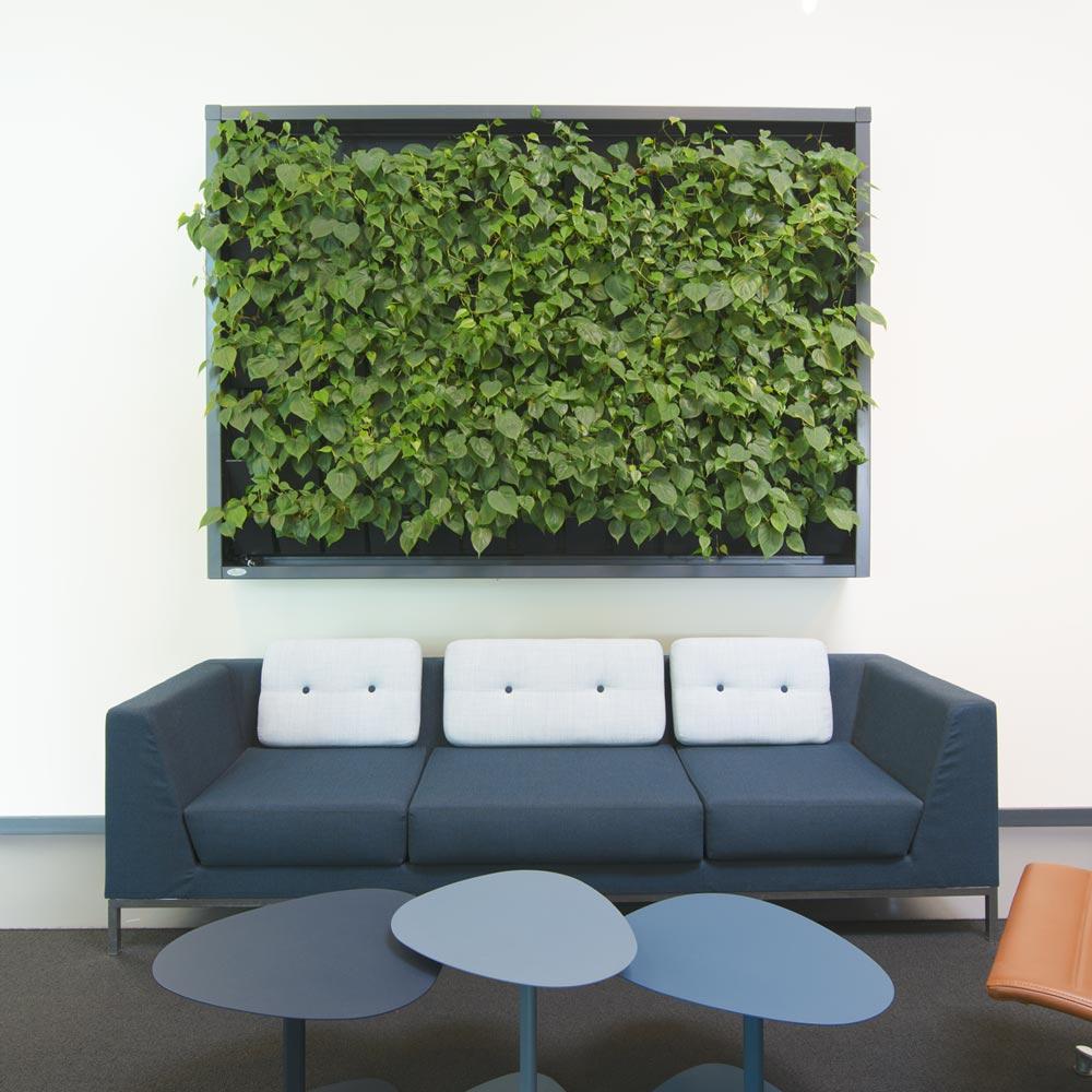 groen plantevaeg, kontormiljo,