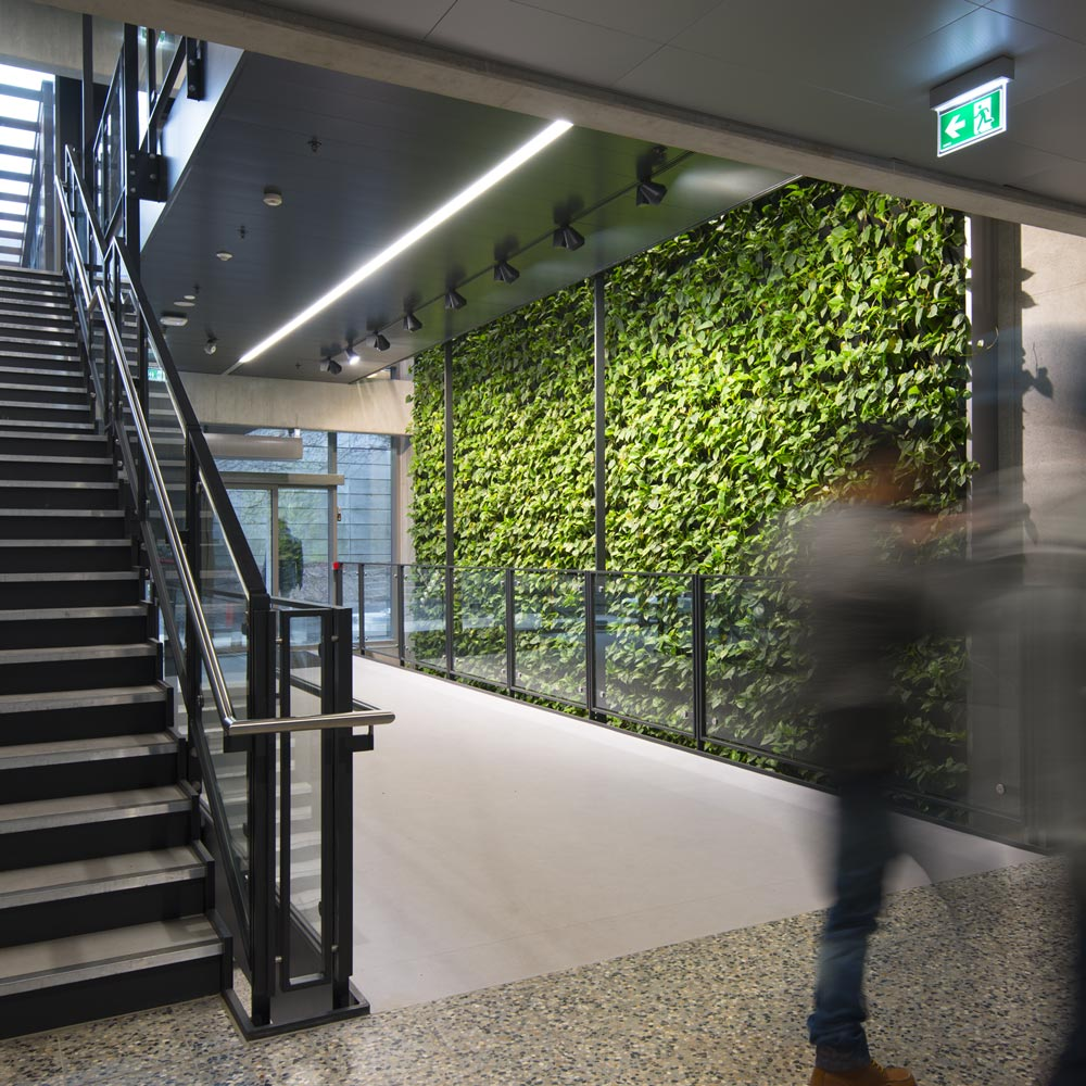 Stor indendørs plantevæg,
