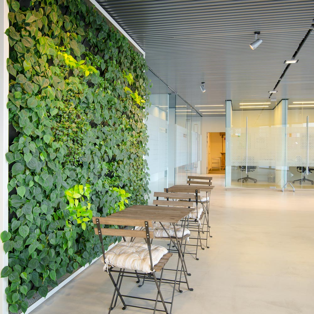 Grøn plantevæg kontor,