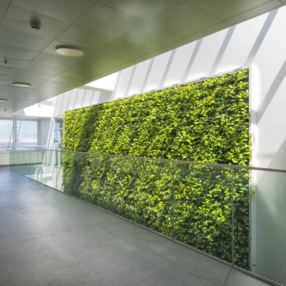plantevæg indendørs,