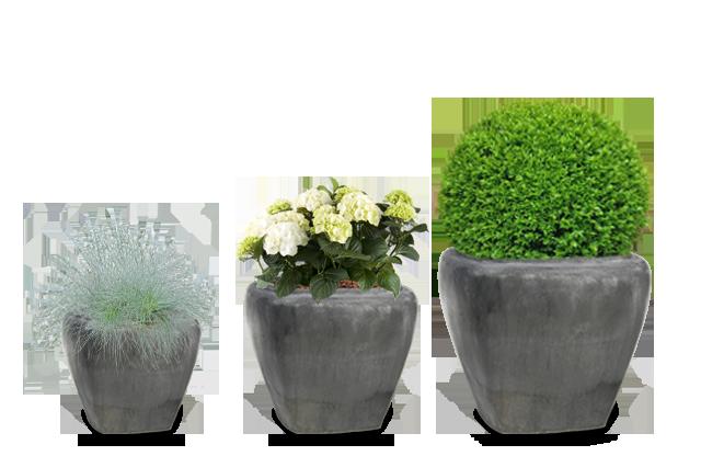 planter i udekrukker,
