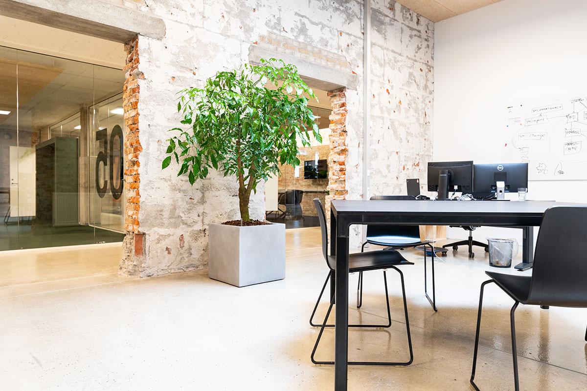 Råt kontormiljø, stor grøn plante,