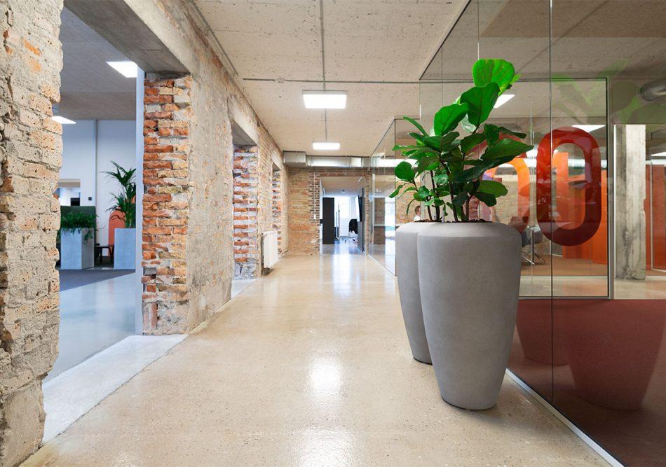 Boligportalen, Sandfarvet krukker med grønne planter, Ficus lyrata, Rustikt kontor,