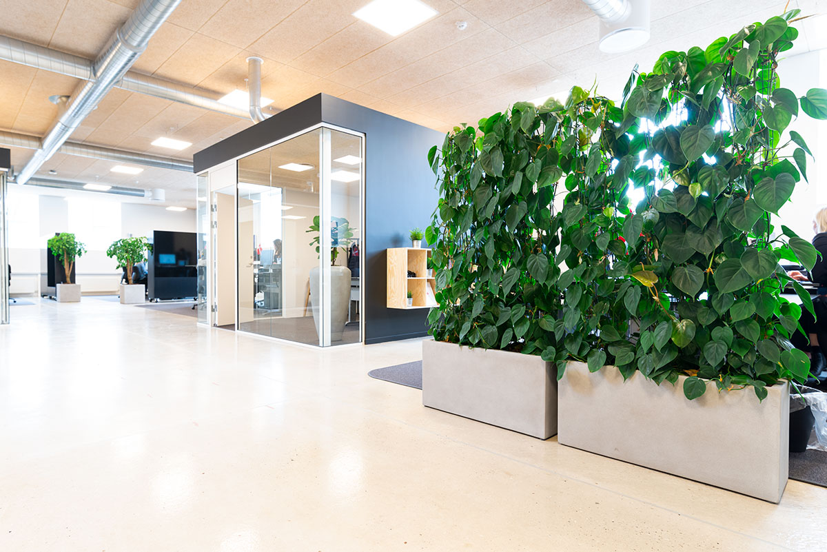 Philodendron scandens, afskærmning med planter,