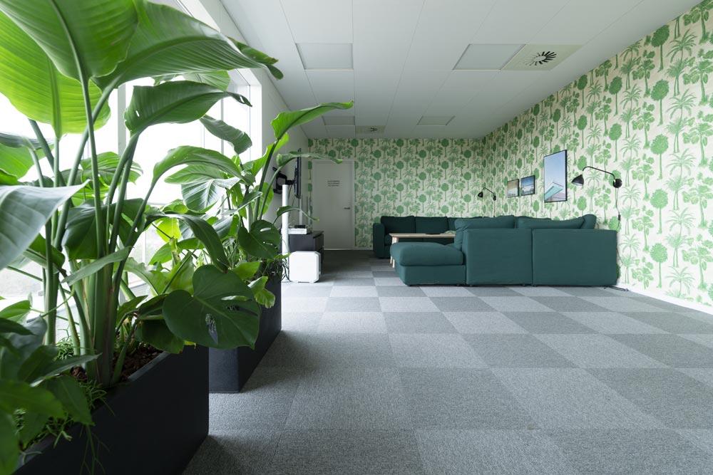sammenplantning, store grønne planter, Ole Larsen