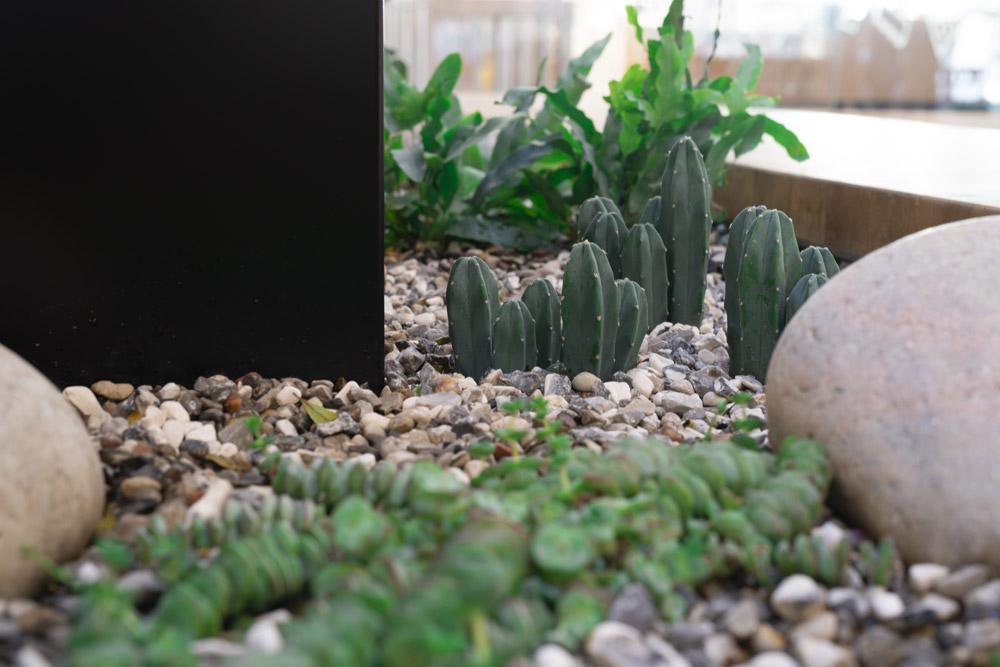 sukkulenter, kaktusser,