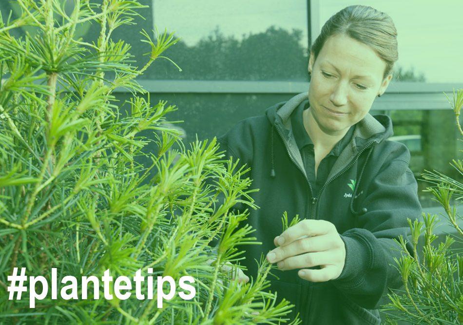 tips til plantepasning,