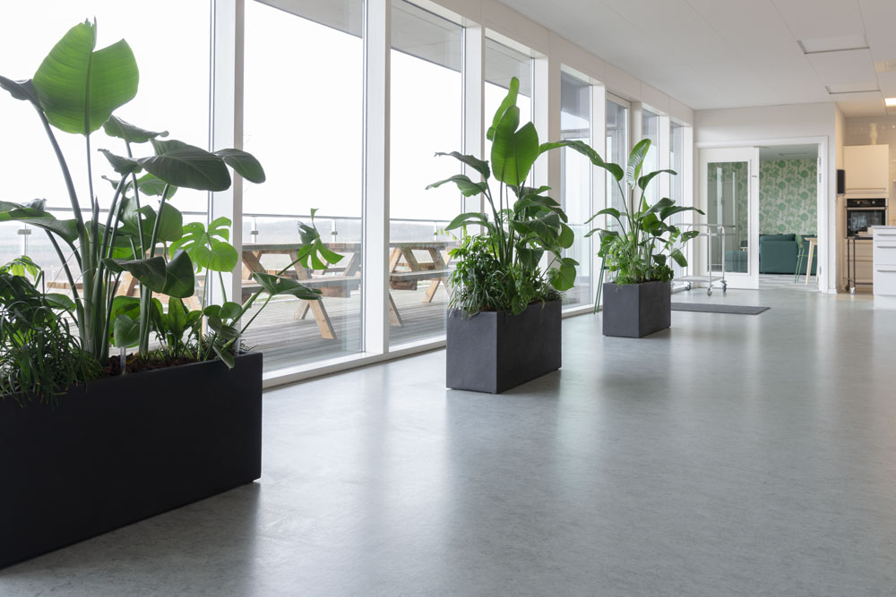 Godt arbejdsmiljø, Grønne planter kantine, planter til kontoret
