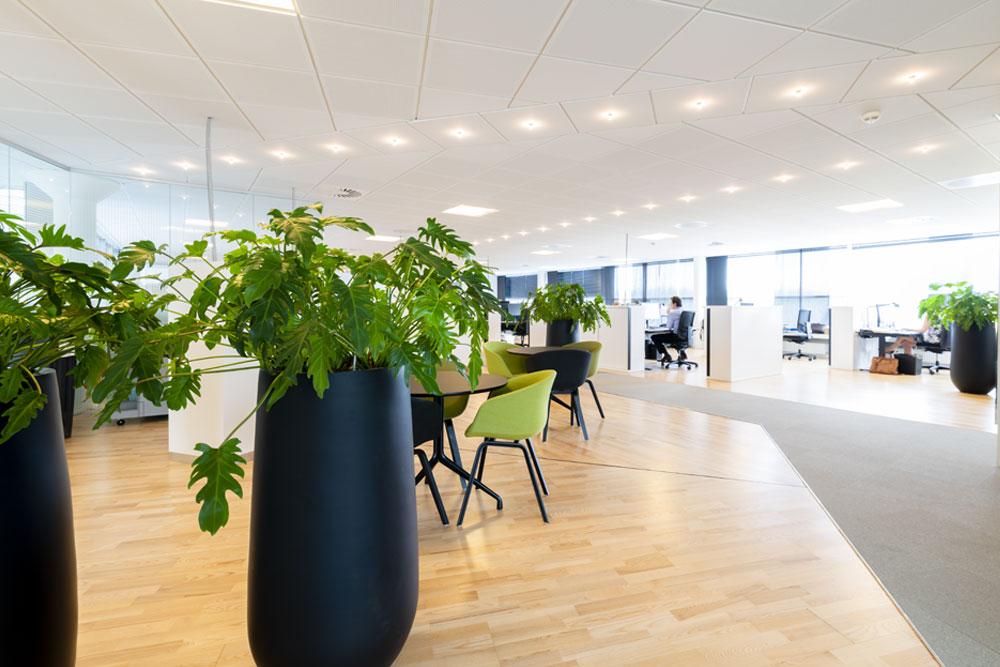 kontorplanter, philodendron, sorte krukker, planter til kontoret