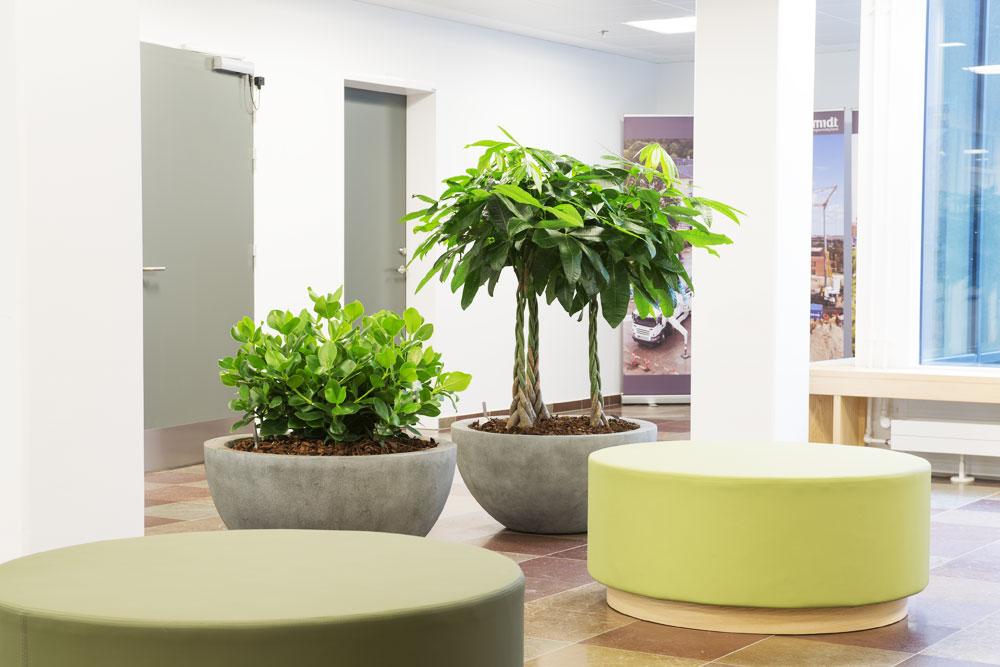 Godt arbejdsmiljø, runde grå krukker med planter, letvægts krukker, planter til kontoret