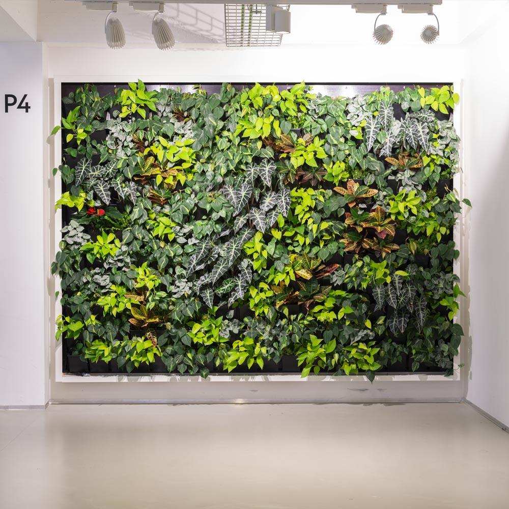 vertical garden, natural Greenwalls,