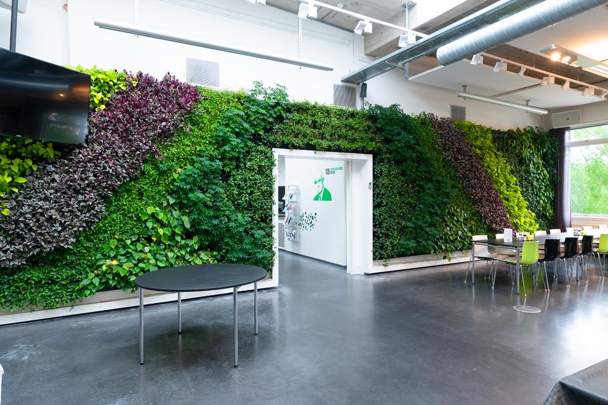 plantevæg, grøn væg, kantine,, plantevægge