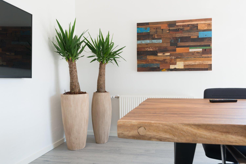 Yucca, planter i mødelokale,