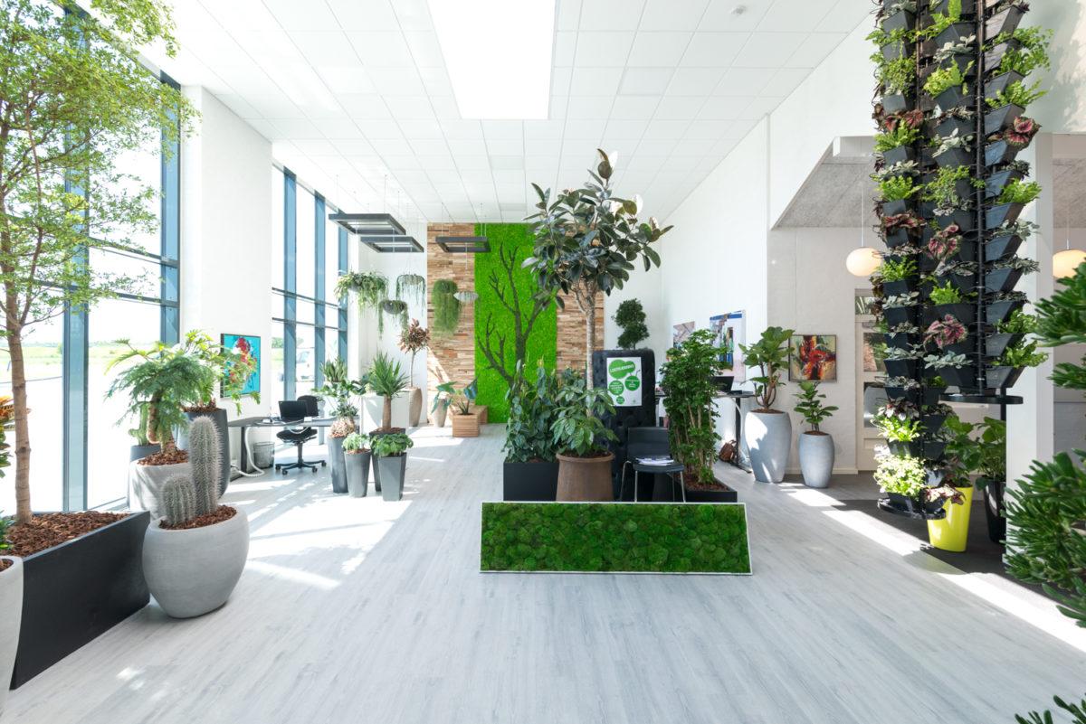 Fremtidens arbejdsplads, showroom med planter, grønt mos,