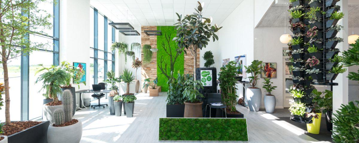 Grønne planter, frisk luft
