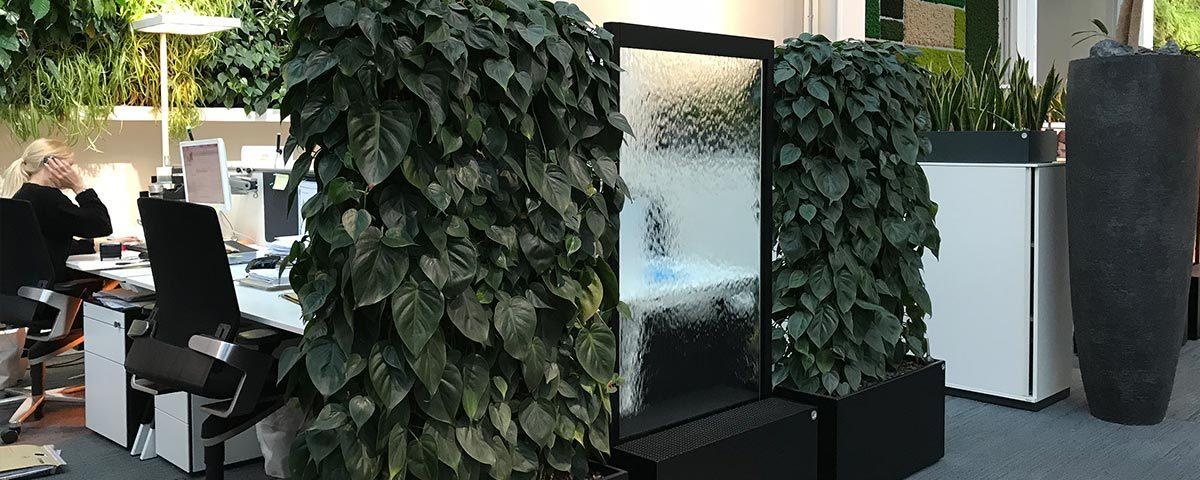 Frisk luft, vandvæg, scandens, planter renser luften