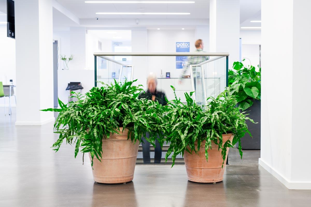 Planteservice på Fyn, indendørs planter,