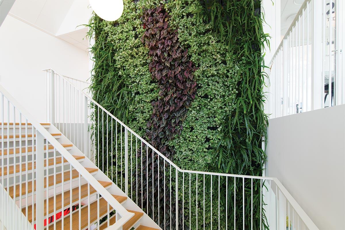 Trappe, Plantevæg, Natural Greenwalls,