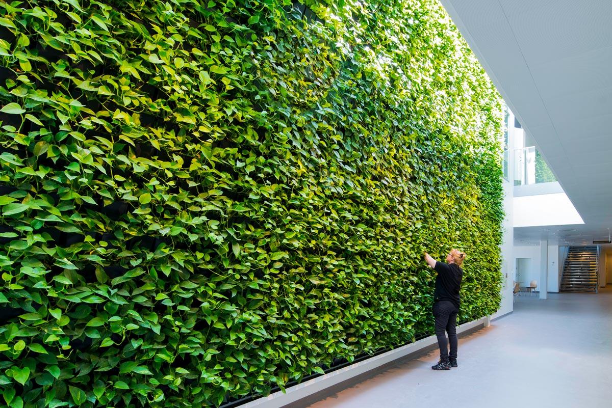 grøn væg,