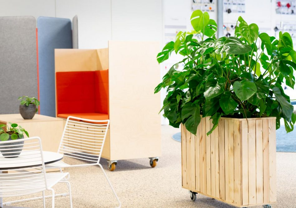 Monstera, bloggerplante, mormorplanter,