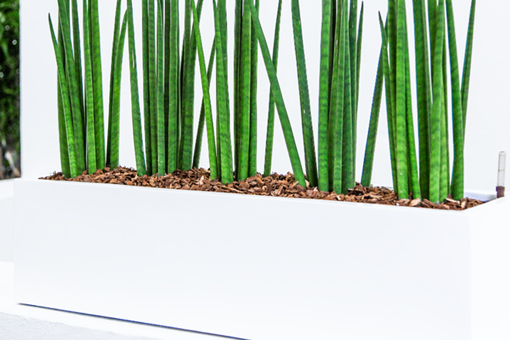 Ferietips til planter