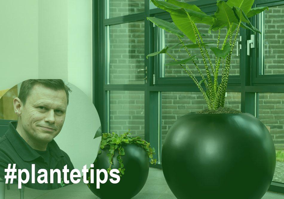 Planter i ferien, Tips til planter,