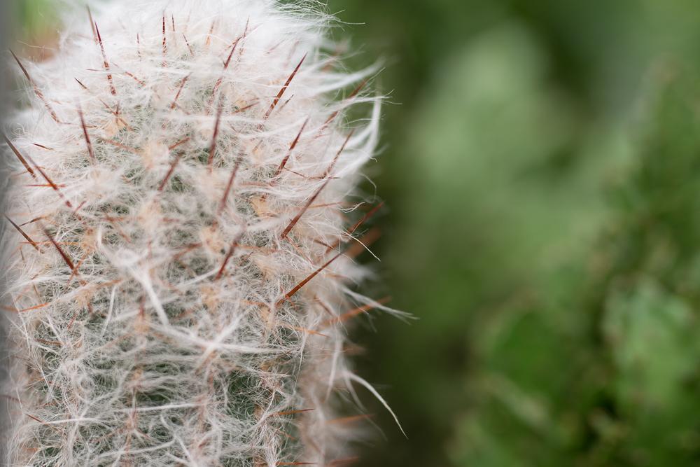 kaktus, kaktusser, tips og tricks, historier, guide