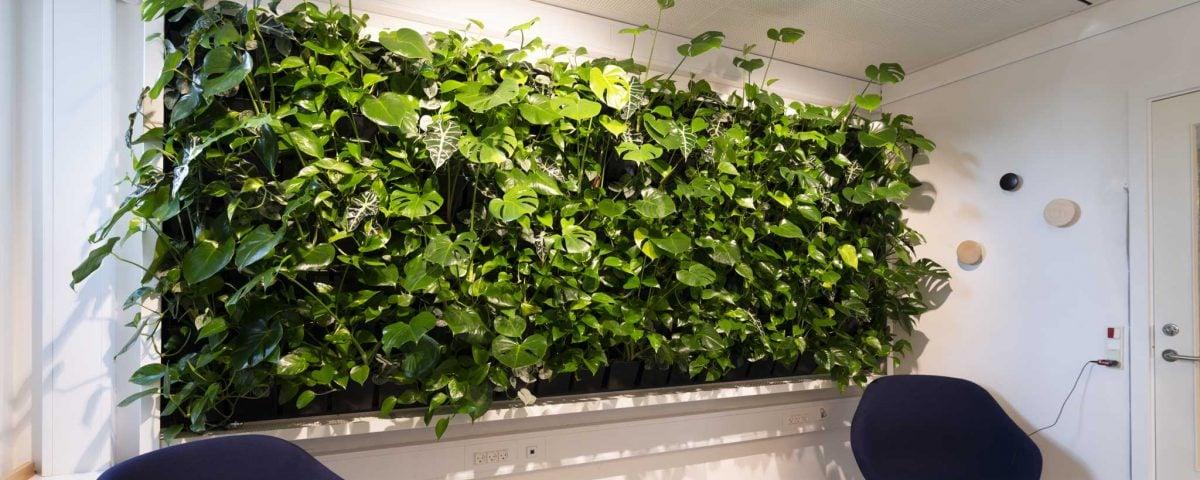 mødelokale, plantevaeg, green wall,