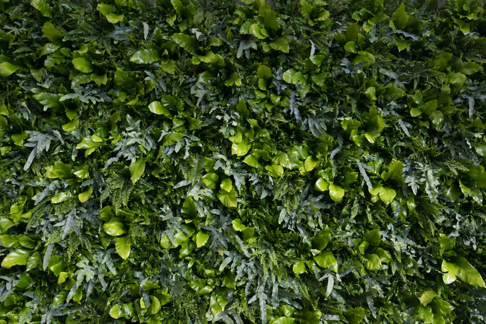 Obama i Kolding, plantevæg, Obama plantevæg, plantevæg SDU, Plantevæg SDU Kolding