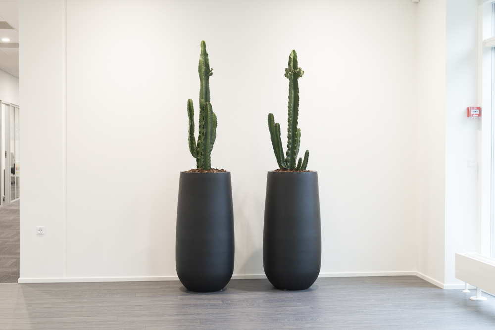 Alfa Laval, Euphorbia ingens, Sorte krukker, Kaktus,